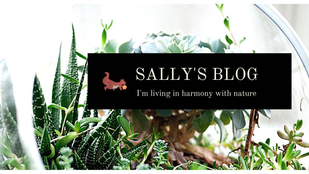 sally講師のブログ(アメブロ)